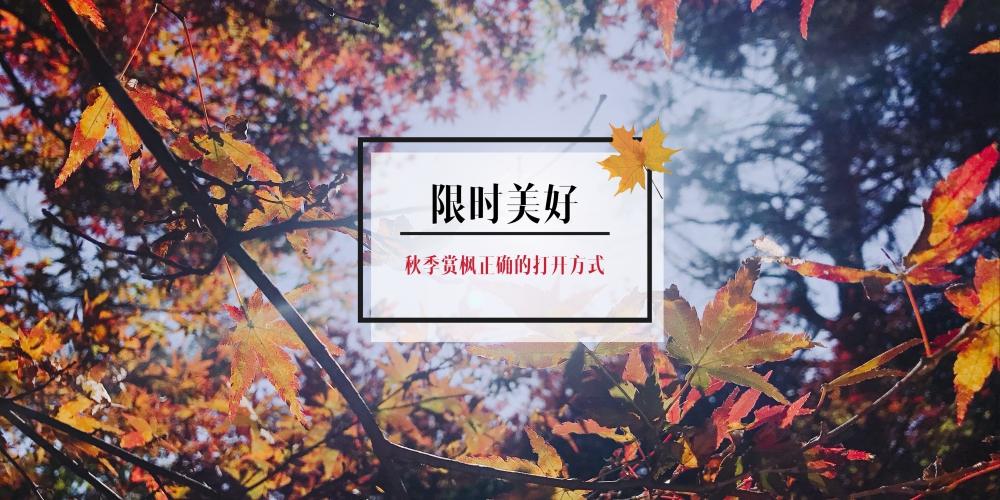 限时美好|秋季赏枫正确的打开方式